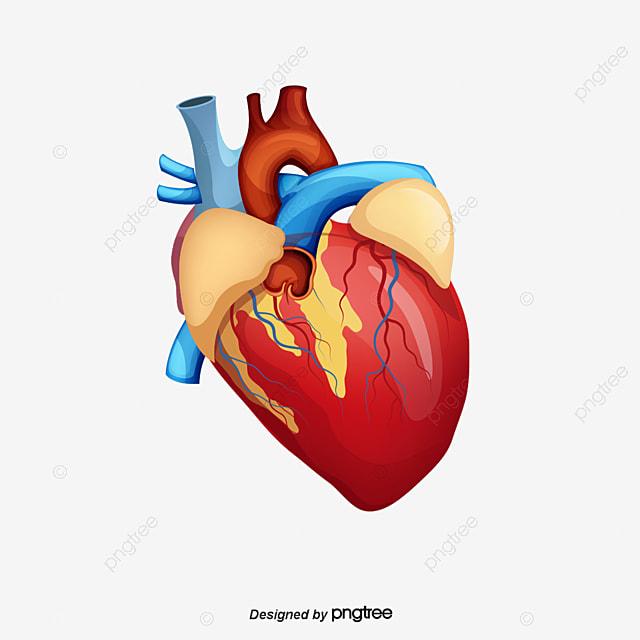 Ngủ dậy muộn có thể dẫn đến các bệnh về tim