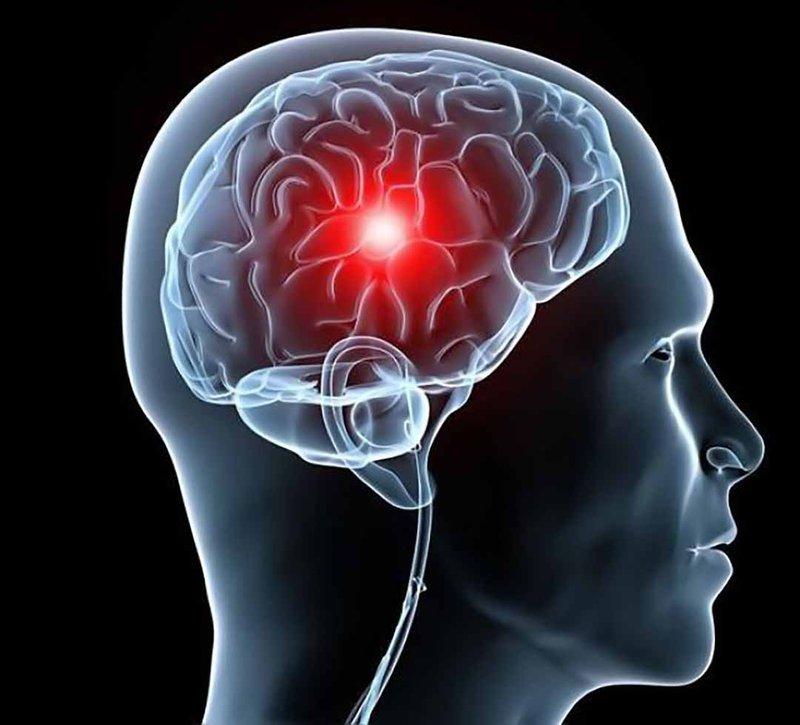 Não bộ trong cơ thể người chỉ nặng 1kg