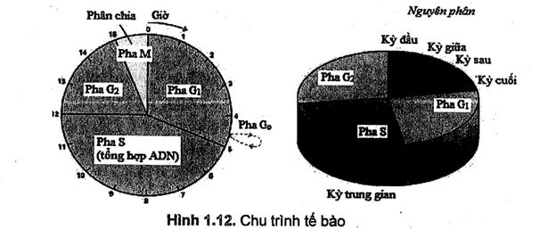 Có hình vẽ chi tiết về các phần nói đến trong sách hóa sinh y học pdf